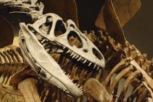 Dinosaur bones Istock